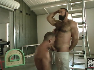 latino bear hd videos